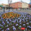 Miasto pełne kolorowych kwiatów! [foto]